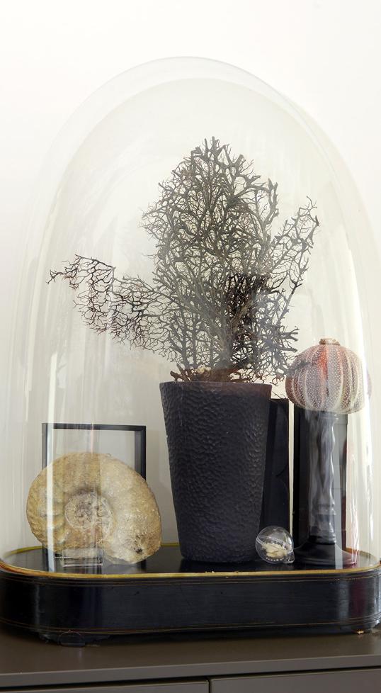 Cabinet de curiosit cloche malo design - Deco cabinet de curiosite ...