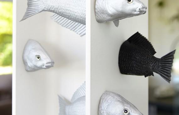 cabinetcurio_poissons